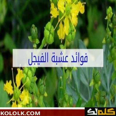 طب الاعشاب النباتية: فوائدها واستخداماتها