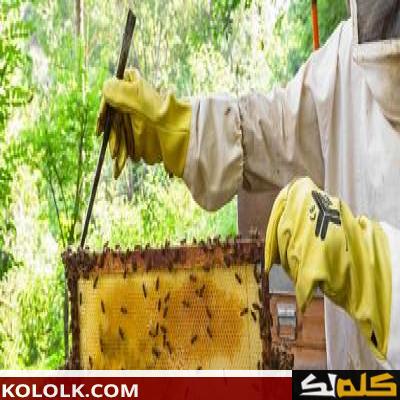 طريقة تربية النحل بتونس