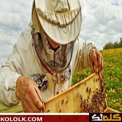 كيف ينام النحل