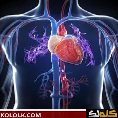 دينجي غير مناسب فيلادلفيا مكان القلب في جسم الانسان بالصور Sjvbca Org