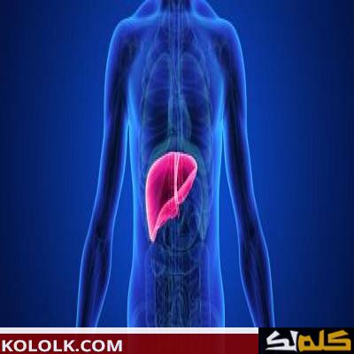 أين موقع الكبد في جسم الإنسان