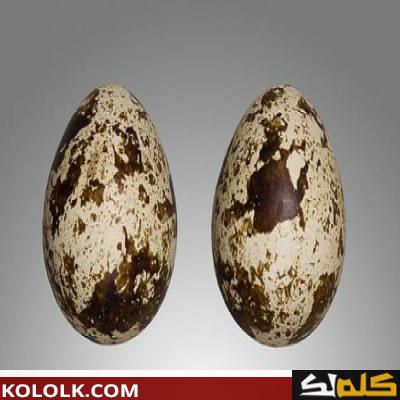 فوائد بيض الفري