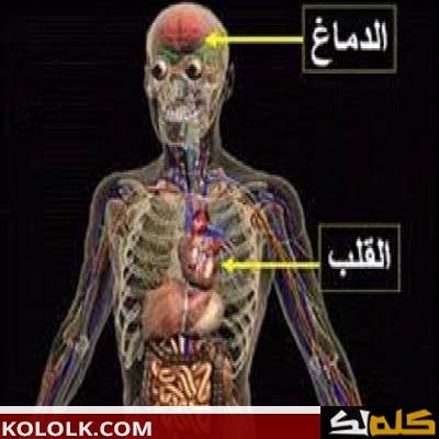 اين يوجد ويقع القلب في جسم الإنسان