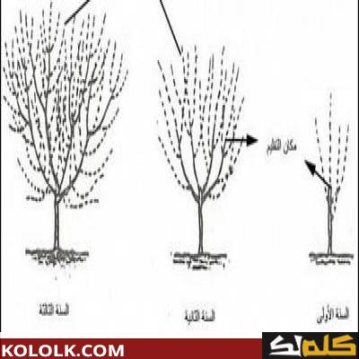 كتاب شجرة البرتقال pdf