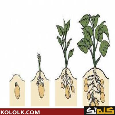 نمو النبات