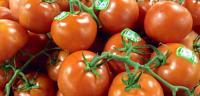 طريقة تصبير الطماطم