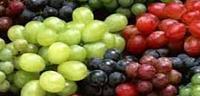 ما هى فوائد أكل العنب