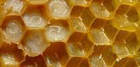 فوائد عسل ملكات النحل