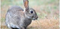 ماذا يأكل الأرنب