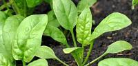 كيف نحافظ على النباتات