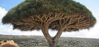 أنواع الأشجار