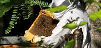 طريقة تربية النحل فى ليبيا