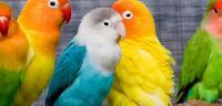 خواطر عن الطيور