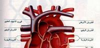 تعرف على ما هى أمراض صمامات القلب