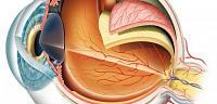 اول من شرح تركيب العين