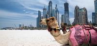 موقع دولة الامارات العربية المتحدة