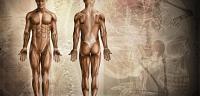 ما عدد عضلات جسم الانسان
