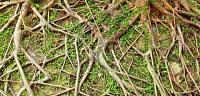 ما أهمية وفائدة الجذور والسيقان للنباتات