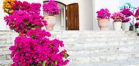ما هو الفرق بين الوردة والزهرة